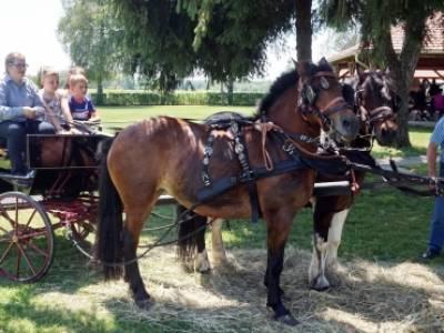 Tradicionalna vožnja kočijama